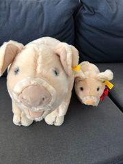 steifftier schweine