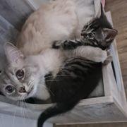 Unser letzter Kitten bube sucht