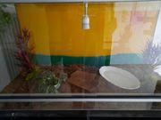 Terrarium mit Unterschrank