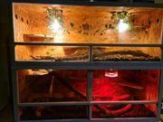 terrarium mit Boa und phytons