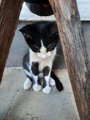 Katzenbaby Katzenkinder Kater