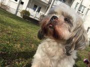 Biete Regelmäßige Hundebetreuung Urlaubsbetreuung