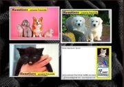 Haustiere-unsere kleinen Freunde - Infocards