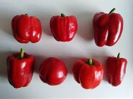 Pflanzen - Samen Paprika rot Chili De