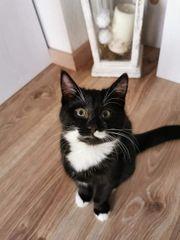Katze sucht neues Zuhause