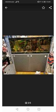 Fisch Aquarium ohne Fische und