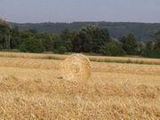 Weizenstroh Rundballen