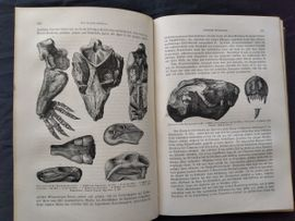 Erdgeschichte - 2 Band Beschreibende Geologie: Kleinanzeigen aus Bregenz - Rubrik Fach- und Sachliteratur