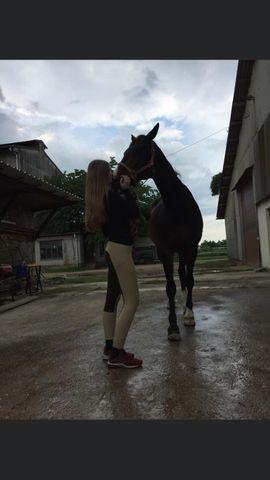 Alles Mögliche - Suche Reitbeteiligung Reiter sucht Pferd