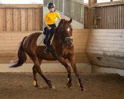 Braves Pferd Pony gesucht
