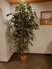 Kunstbaum Ficus Benjamini