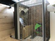 Ratten mit Käfig und Zubehör