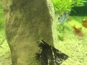 verschenke meine aquarium Fische