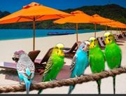 Vogel Urlaubsbetreuung