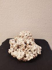 verschiedene Stein Riff Artikel - große