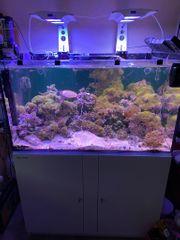 Komplette Meerwasser Anlage mit allem