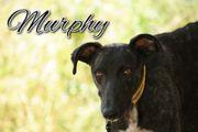 Schenken Sie Murphy seine Familie