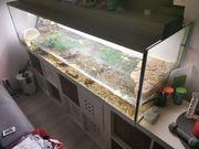 Aquarium mit zwei Schildkröte
