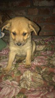 Baby Pixie möchte adoptiert werden