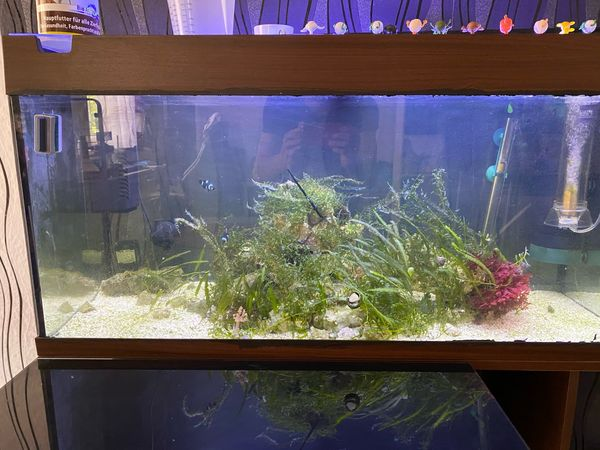 Meerwasser Aquarium 200 Liter komplett