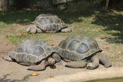 Schildkröten Informationsabend am 29 11