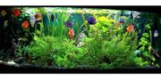 Vallisneria Hornkraut Pogostemon etc Pflanzen-MIX