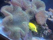 Weichkorallen Meerwasser Korallen