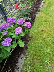 Gartenpflege Gartenarbeiten wir sind für