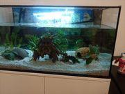 Aquarium Fische oder Axolotl komplett