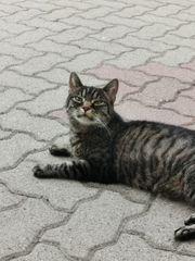 Katze mit Charakter