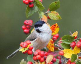 Mispel als Hochstamm: Kleinanzeigen aus Herrenberg - Rubrik Pflanzen