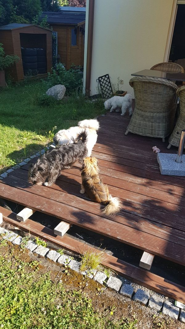 Hundesitter Hundebetreuung Hundepension