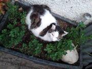 Katzen suchen Mietz-Haus - Belohnung