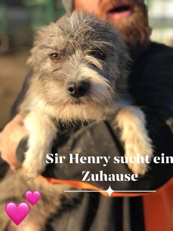 Mix-Rüde Sir Henry sucht Zuhause