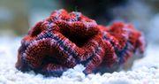 Meerwasser Korallen und Fische tolle
