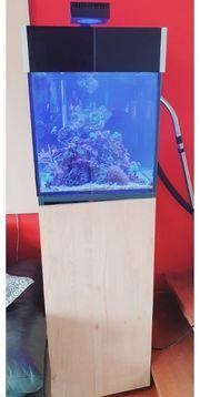 Meerwasser Aquarium Meerwasseraquarium komplett 125