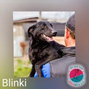 Blinki - Hundesenior wartet auf seine
