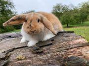 Zwergwidder Kaninchen Mädchen