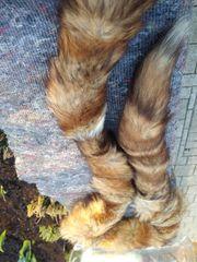 Verschiedene Pelzmützen und Schaal zu