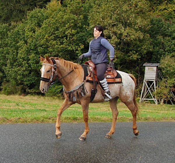 Appi-Stute top Freizeitpferd