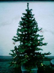 Weihnazsbaum