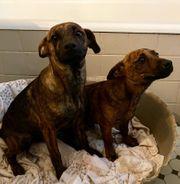 Cleo und Cluso suchen jeweils