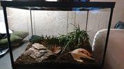 Aquarium Terrarium mit 2 Zwergskorpionen