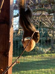 2 Chinesische Baumstreifenhörnchen