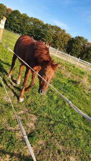 Biete Versorgung Ihrer Pferde an