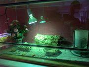Terrarium mit UV-Lampe 50 Watt