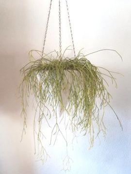 KERAMIKKEGEL mit Pflanzen