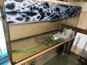 Verkaufe 120x50x40 aquarium mit abdeckung