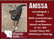 Anissa - freundliche Welpenmaus sucht Zuhause