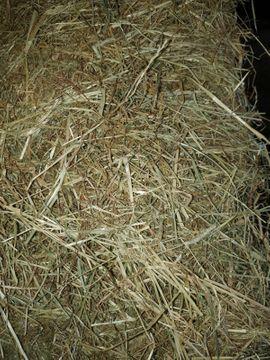 Pferdeheu: Kleinanzeigen aus Langenegg - Rubrik Traktoren, Landwirtschaftliche Fahrzeuge
